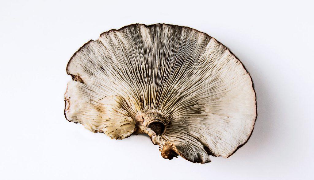 grybai-smegenys